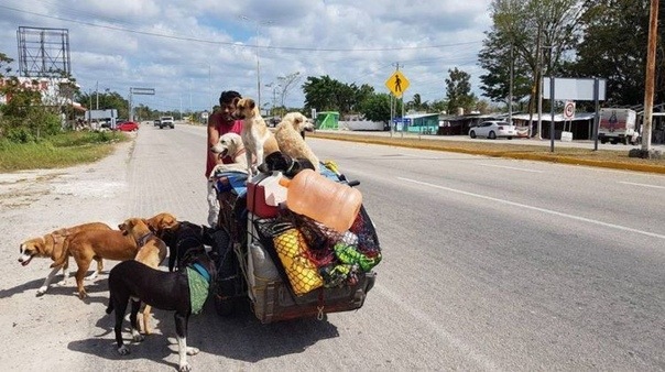 """Покинув свой дом в 2013 году, мексиканец Эдгардо """"Перрос"""" Зунига поставил перед собой четкую цель - помочь как можно большему количеству бродячих собак. В течение последних пяти лет он путешествовал по 14 мексиканским штатам и спас более 400 дворняг: выха"""