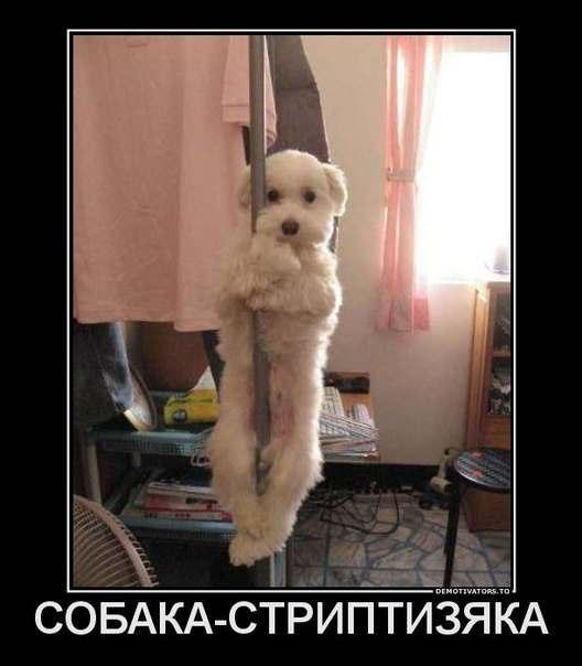 http://cs309623.userapi.com/v309623339/1fa5/BKzVqFHmdBE.jpg