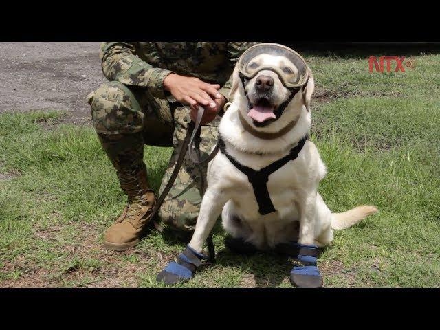 Binomios caninos entre el valor y el heroísmo