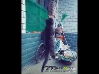 Очень голодный котик