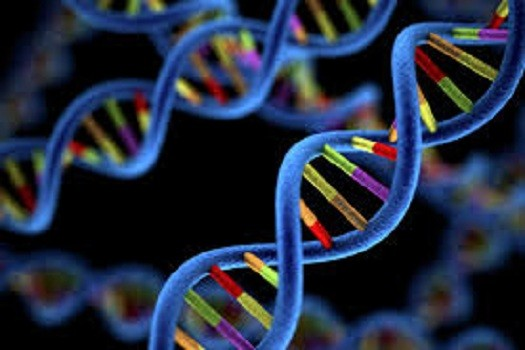 Генетические аномалии являются частой причиной множественных выкидышей.