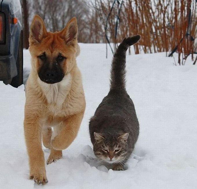 Кошки и прочие забавные животные  - Страница 3 BEzmYB5MJUw