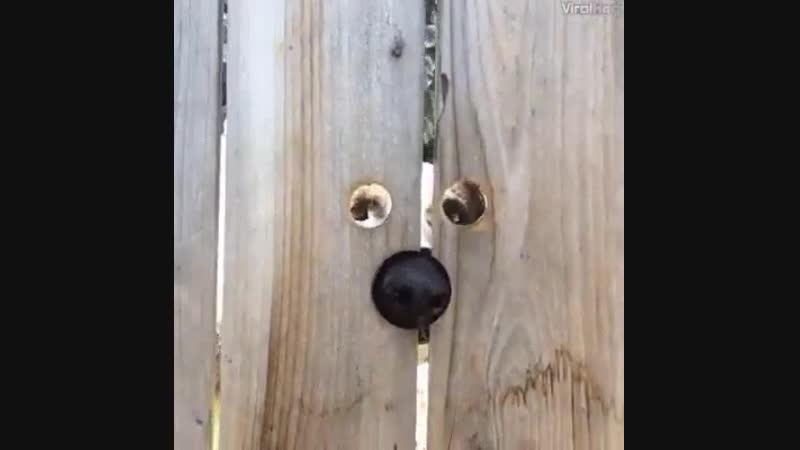 Вас снимает скрытая камера 😊