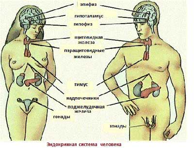 Link: info-apteka.ru