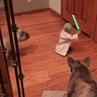 Master Yoda VS Dark Side DOGS