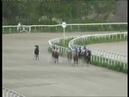 12.05.2017 - 8 скачка на лошадях 3-х лет чистокровной верховой породы - Сеньор