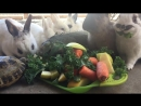 Ужин в Animals Vegan restobar