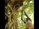 Geoffrey Gurrumul Yunupingu ''Wiyathul'' - The Most Amazing Song Ever