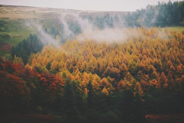 Пахнет осенью. Что-то необыкновенно грустное, приветливое и красивое.