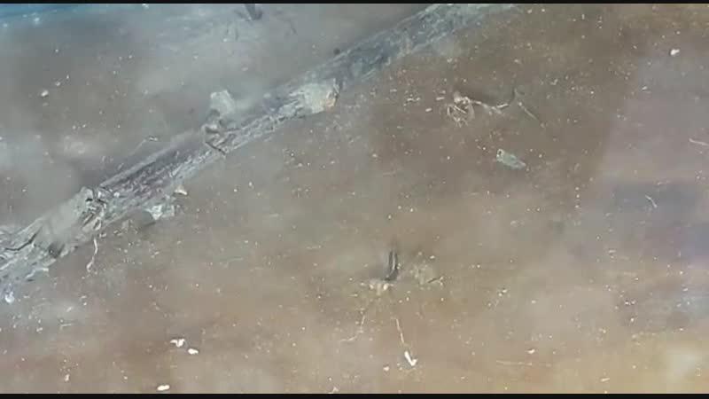 VID-20181017-WA0030 Богомольчики вылупились