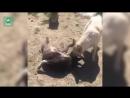 Приют для животных в деревне Ермолово