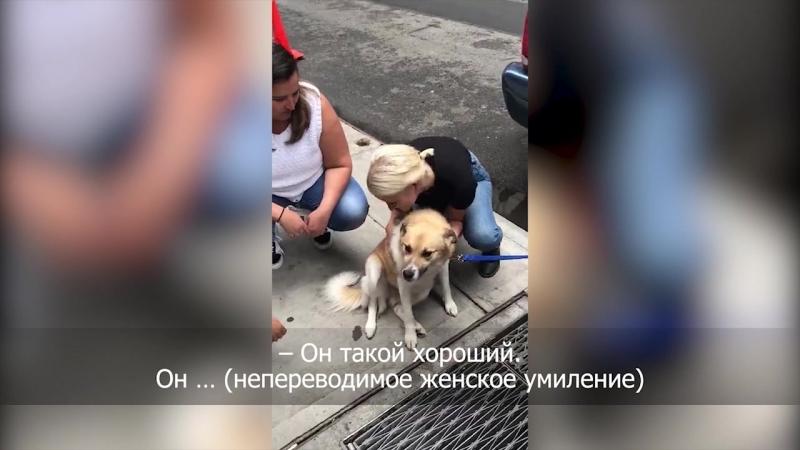 Омского пса Лешика привели в американский офис