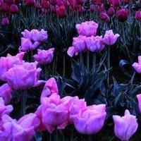 Весенний Цветок, 2 апреля 1988, Уфа, id227835683