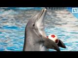 Россия-Хорватия.Прогноз дельфина