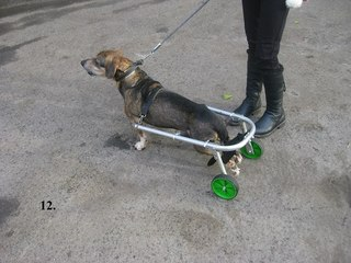 Инвалидную коляску для собаки своими руками
