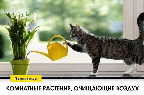Топ-7 растений, очищающих воздух в доме (1 фото) - картинка