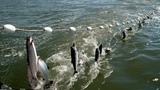 Рыбалка, ловить разрешено! Amazing Big Fishing Catching Skill, Gill Net Fishing on The Sea