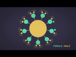Почему мужских особей столько же, сколько и женских