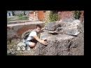 Огромное дерево росло на усадьбе Миклашевских