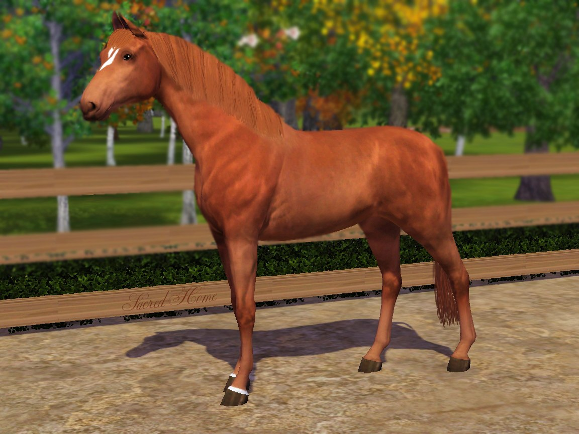 Регистрация лошадей в RHF 1.1 - Страница 2 XqjnOO9VedQ