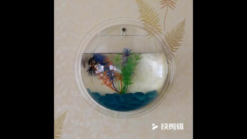New Brand Aquarium Wall-mounted fish tank Аквариум нового бренда Настенный аквариум