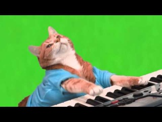 Make Your Own Keyboard Cat - Green Screen