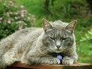 Стригущий лишай у кошек.