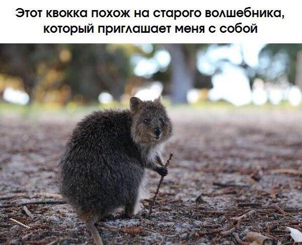 Фото №456257445 со страницы Анастасии Боровиковой