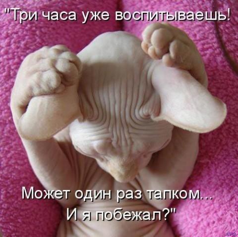 http://cs406129.userapi.com/v406129391/3538/_1xXprOIuLA.jpg