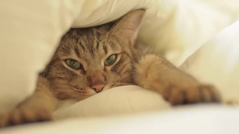 Кодекс домашнего кота. Смеялась до слез!