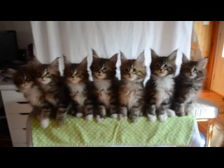 Kittens & The Invisible Man