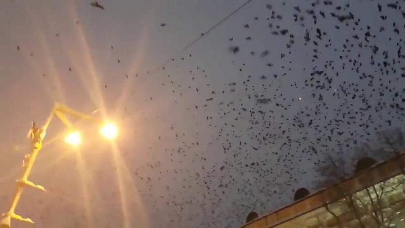 Всюду знаки Там, где Порошенко автокефалию продвигает, вороны летают
