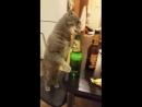 Братья наши меньшие порой те еще алкоголики… А милые котики пагубному пристрастию подвержены даже больше собак.. Полюбуйтесь, ка