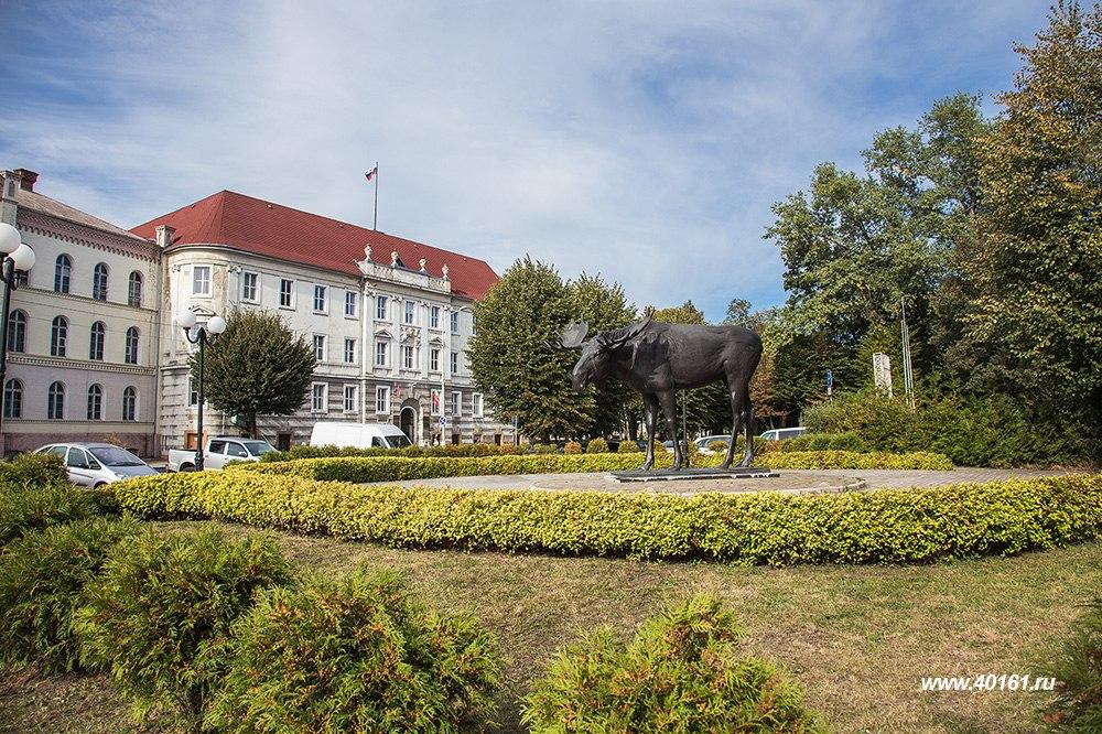ываК 90-летию тильзитского лося музей Советска готовит специальную выставку