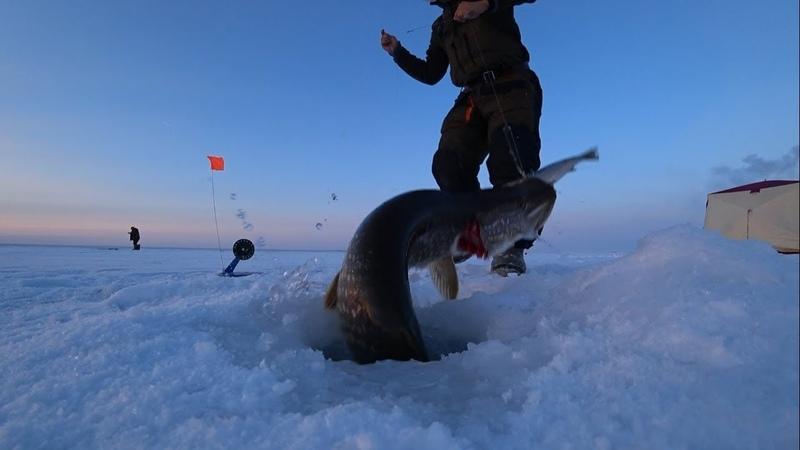 Огромные щуки на жерлицы в Якутии 2 часть Fishing pike Yakutia