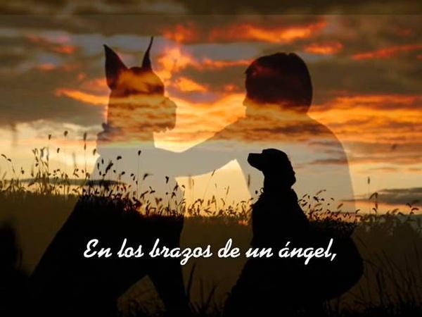 Angel.. Sarah Mclachlan (Subtitulada en Español)