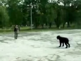 Шигаев Роман и ризеншнауцер Банзай. Показательное выступление по дрессировке. Тольятти, лето 2009.