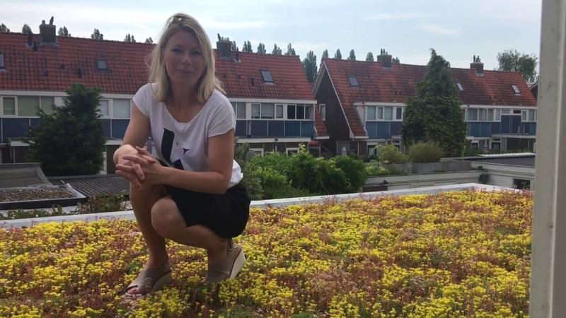 Subsidie voor een groen dak