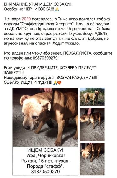 Может кто видел собаку, бегала по Черниковской, после видели на трассе