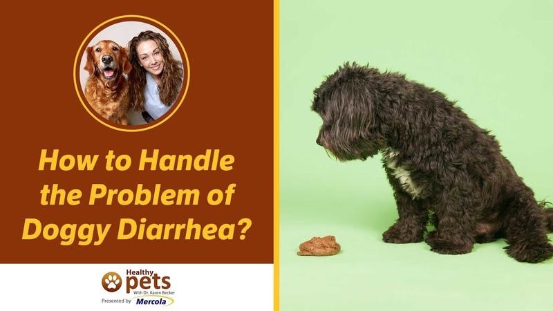 Как справиться с диареей у собаки / How to Handle the Problem of Doggy Diarrhea?