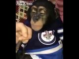 LiveLeak Monkey Smoking Weed