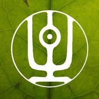 Логотип ЧАЙНАЯ ШАМАНИКА