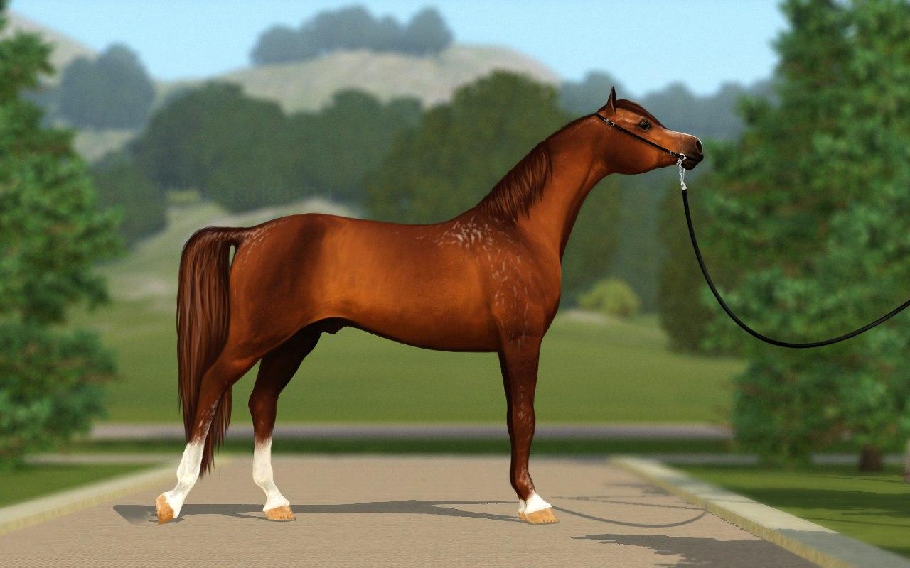 Регистрация лошадей в RHF 1.1 - Страница 39 8KaRJjuKTks