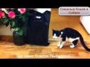 Кот и Робот Пылесос неудачное знакомство
