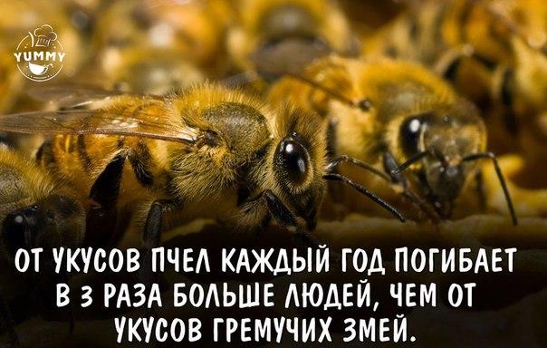 https://pp.vk.me/c543100/v543100659/319b6/USPdWAHHMYI.jpg