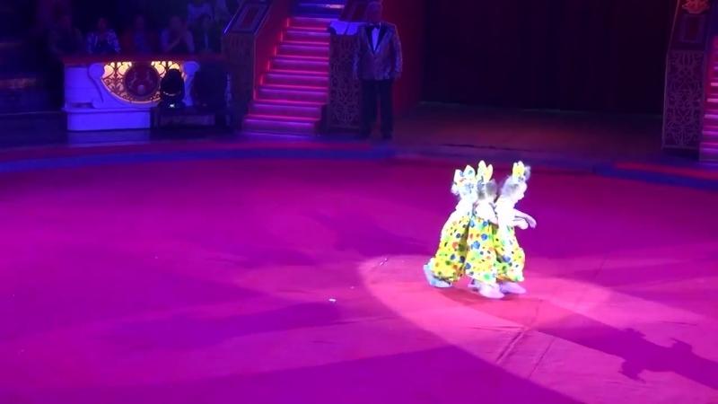 «Богатырская сила» Детская цирковая студия
