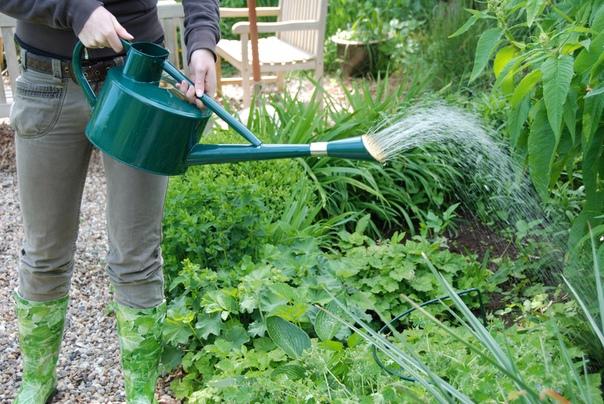 Полезная химия для сада