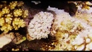 Red see.relax. Красное море подводная съёмка