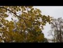 Жалобно стонет ветер осенний Муз.М.Пугачева,Ст Д.Михайлова,спела Галина П