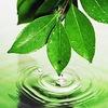Экология. Здоровье. Красота.